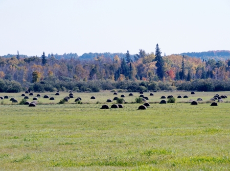 Bales Of Hay - Bales Of Hay, Nature, Autumn, Bales Of hay, Photography, Field