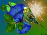 BLUE FLOWERS WITH BUDGIE