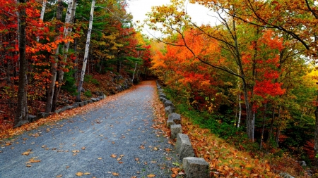 autumn road - fall, autumn, photography, roads, beauty, nature, forests