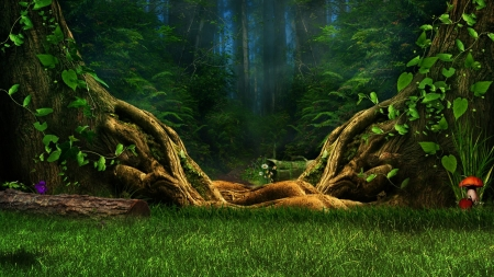 magical forest - woods, trees, creative, photography, green, magical, beauty, nature, forests