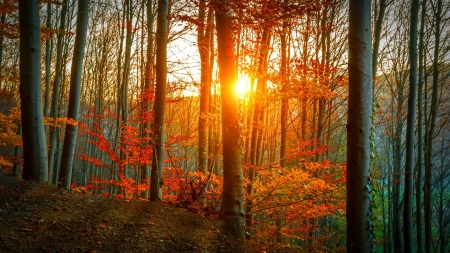 autumn forest - autumn, photography, sun, rays, beauty, nature, forests, trees