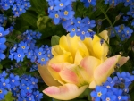 Blue Yellow Flowers