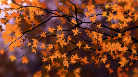 Falling Maple - fall, autumn, tree, leaves, maple, orange, bright, Firefox Persona theme