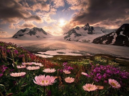 Alaskan Garden - scenic, rock, Alaska, beautiful, clouds, cold, nice, stone, scenery, amazing, sky, cool, snow, mountains, flower, awesome, garden, nature, petals, frozen, scene, field, landscape
