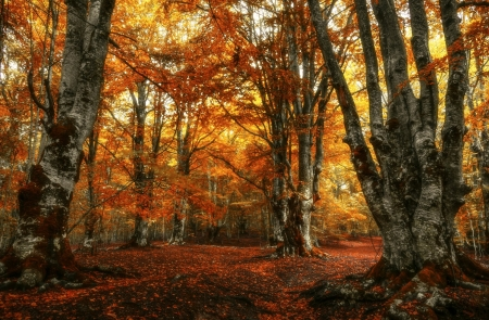 Beautiful Foliage in Autumn Woods - Fall, Woods, Trees, Landscapes, Forests, Autumn, Foliage, Nature