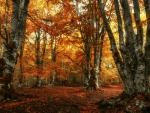Beautiful Foliage in Autumn Woods