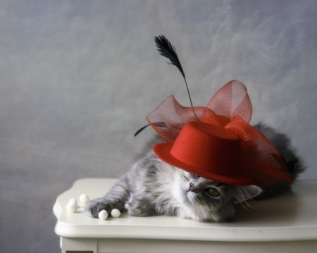 Elegancy - cute, red, funny, cat, animal, elegant, pisica, hat