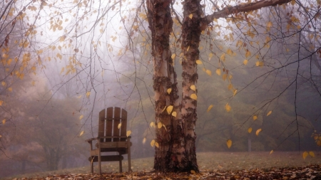 under the tree - autumn, nature, chair, leaf