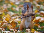 autumn squirrel