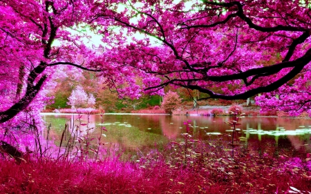 Pink foliage on trees by a river - Pond, Branches, Leaves, Twigs, Water, Landscape, Trees, Pink, River, Lake, Foliage