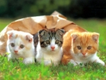 Three Smart Kittens