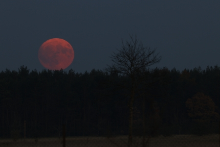 red moon rising - moon, rise, night, space