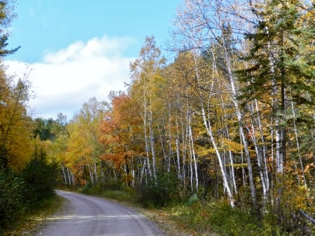 Fall Forest Road - Road, Nature, Clouds, Forest, Photography, Sky, Fall
