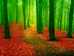 Red Leaf Green Forest