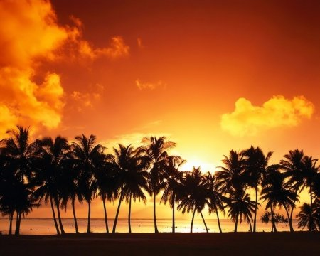 •ღ✿ღ• - beach, sunset, view, coconut tree