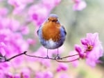 Bird on Pink Flowers F