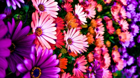 spring flowers - spring, plant, flower, daisy