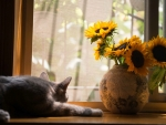 Sunflowers and Cat