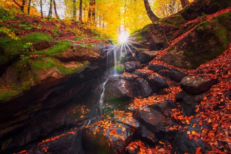 Rocky Sunlit Stream in Autumn - Fall, Forests, Leaves, Moss, Sunshine, Nature, Streams, Autumn, Rocks