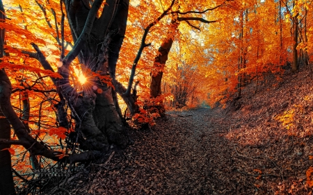 Path in autumn forest - path, sunlight, forest, branches, autumn, sunrays, foliage, beautiful, walk, trees