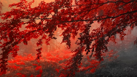 Bright Leaves - woods, grove, fall, sunrise, forest, maple, autumn, leaves, Firefox Persona theme, sunset, trees, bright