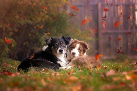 Buddies - grass, leaves, bushes, Autumn, fence, dogs, Fall