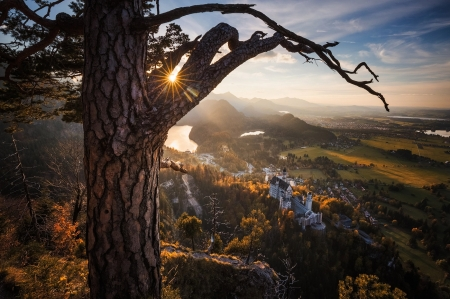 bavaria Neuschwanstein - sun, castle, bavaria, Neuschwanstein, pine, landscape, rays, mountains, nature, tree