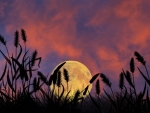 Full Moon at Sunset