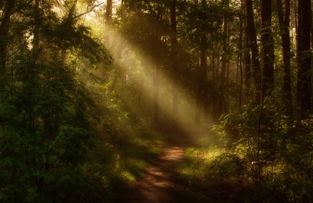 walk in the forest - forest, pathway, rays, summer, nature, trees