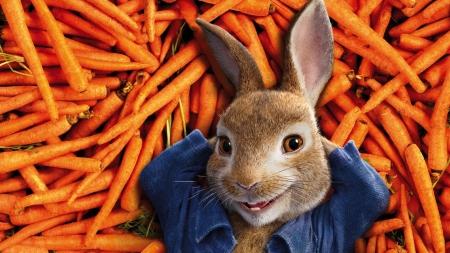 Peter Rabbit 2018 Movies Entertainment Background Wallpapers On Desktop Nexus Image 2324866