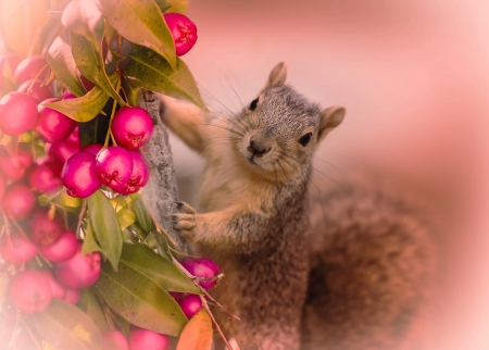 squirrel with berries