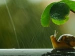Snail under umbrella