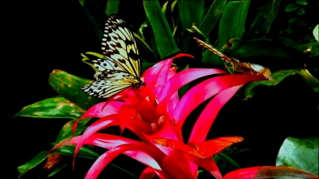 LILIES - BUTTERFLY, PETTALS, LEAVES, NATURE