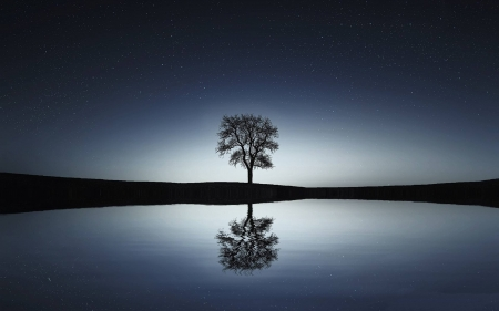 bare tree - stars, cool, nature, sunset, fun, lake