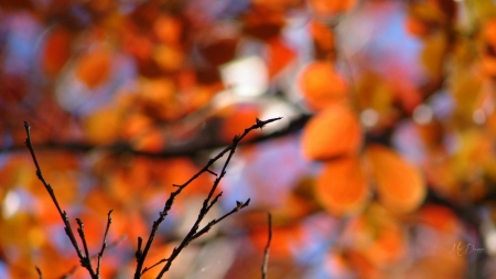 Autumn Glowing - bokeh, fall, leaves, Firefox Persona theme, twig, lights, blurred, autumn