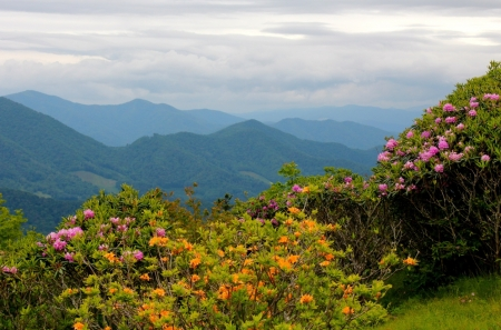 Our Mother Earth - flower, mountain, nature, sky