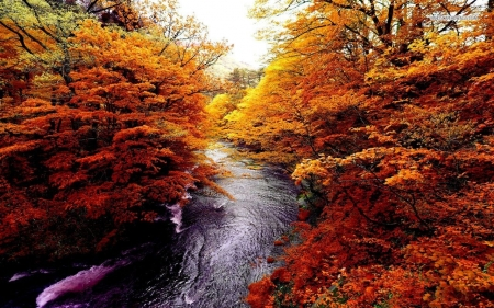 Autumn Rushing River - forest, autumn, nature, river, trees