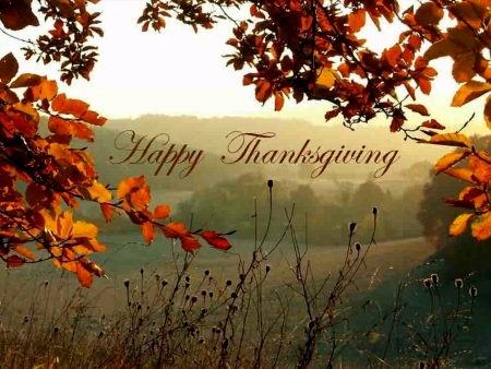 Happy Thanksgiving - Thankgiving, Grass, Field, Fields, Happy, Autumn, Nature