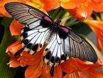 Butterfly on Orange Flowers