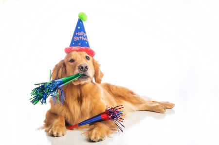Happy Birthday Dogs Animals Background Wallpapers On