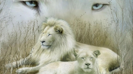 White  Lions - big cat, grass, wild, eyes, Firefox Persona theme, lions