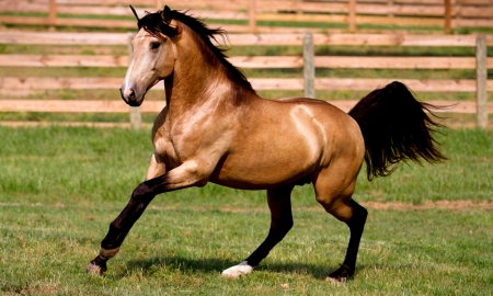 Mushskin - Beautiful, Brown, Horse, Mushskin