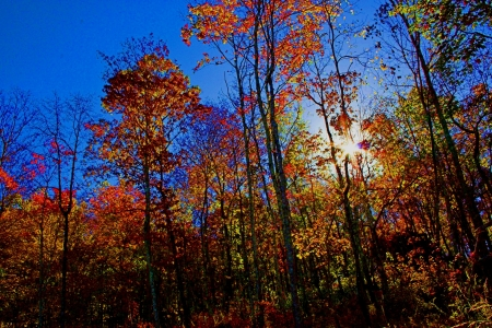 Fall Colors in Alabama - Trees, Nature, Autumn, Leaves, Forests, Fall