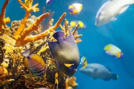 Beautiful Coral and Fish - Fish, Sea, Coral Reefs, Underwater, Nature