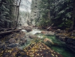 Beautiful Forest Stream in Fall
