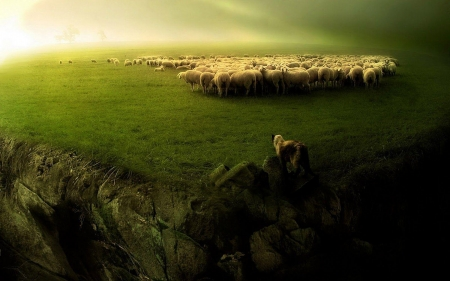 Near the cliff - sheep, green, cliff, fields, ravine, nature