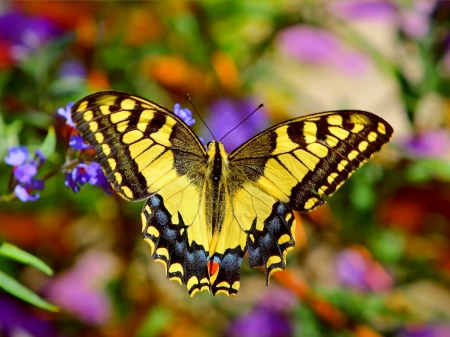 Lovely Butterfly - wings, butterfly, macro, flowers, insects, animal