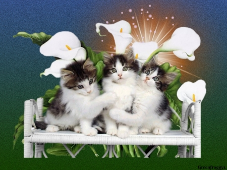 THREE LITTLE KITTENS - THREE, IMAGE, KITTENS, LITTLE
