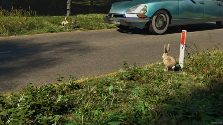 Watership Down The Road Rodents Animals Background Wallpapers On