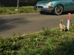 watership down the road